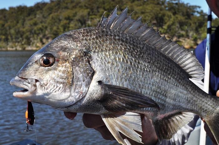cá tráp làm món gì ngon